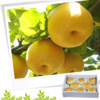 [햇과일] 원황배3kg(5~7개입)
