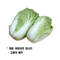 고랭지 배추(통)