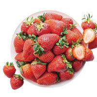 슈퍼프레쉬 딸기(특/500G/팩)
